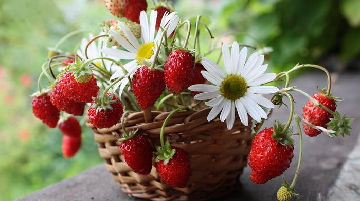 flowers, strawberry, beauty, still life, basket