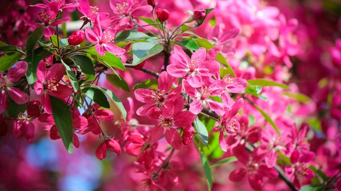 spring, photo, tree, nature, macro, leaves, flowers, branch