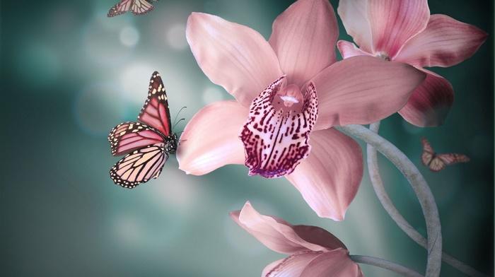 природа, бабочки, цветы, работа, фэнтези, фотошоп, 3D, орхидея
