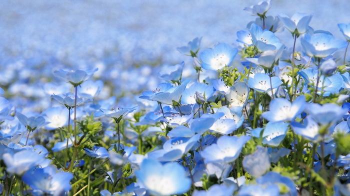 beauty, flowers, Japan, park, bloom