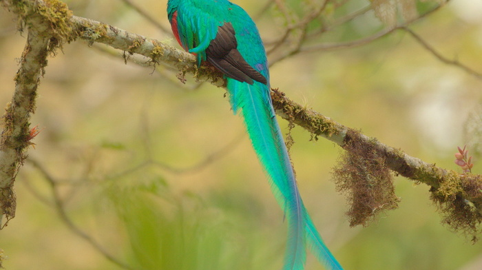 animals, tail, wings, feathers, beauty, bird, branch