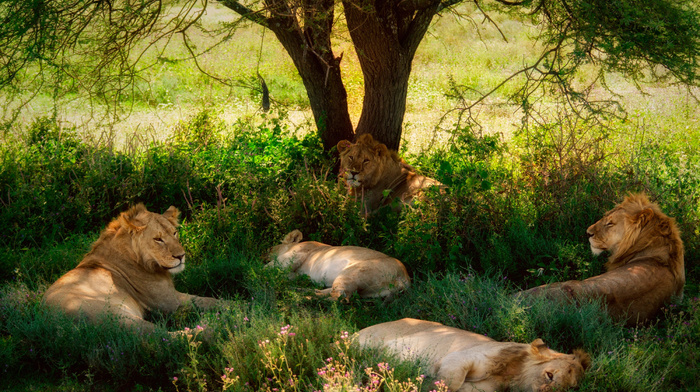 rest, tree, animals, shadow, nature