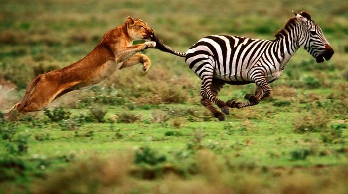 animals, macro, speed, power, photo, food, predator, nature
