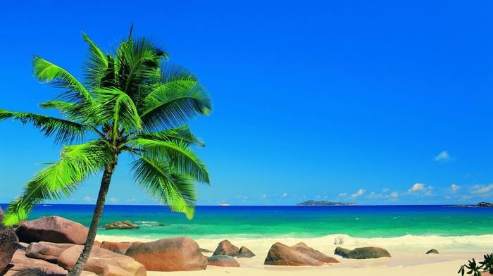 summer, palm trees, Sun, ocean, rest