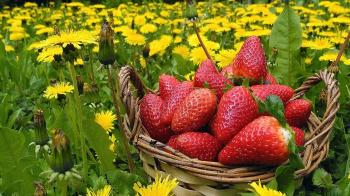 лето, корзинка, одуванчики, природа, цветы, клубника, вкусно