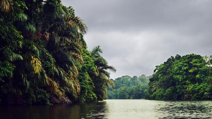 nature, river, cloudy, palm trees, jungle, sky, tropics