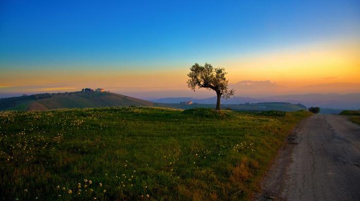 tree, morning, grass, hills, nature, road