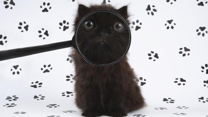 animals, kitten, humor