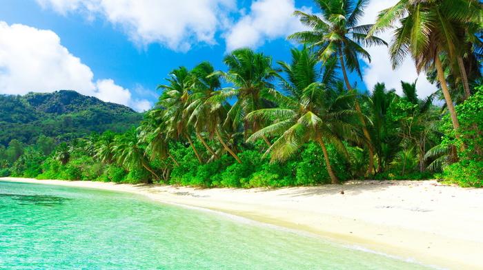 ocean, beach, tropics, nature, jungle, beautiful, mountain, summer