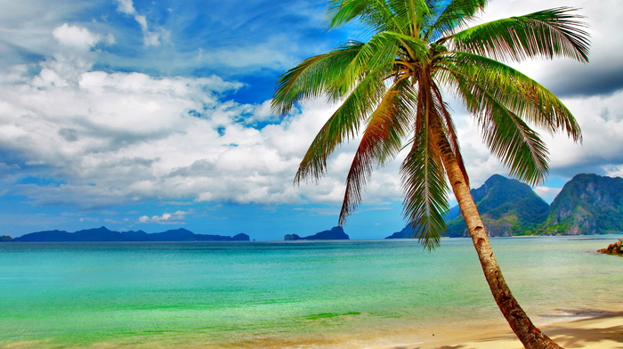ocean, palm, beach, tropics, beautiful, mountain, nature