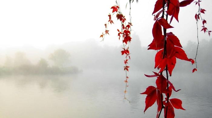 lake, leaves, autumn, mist