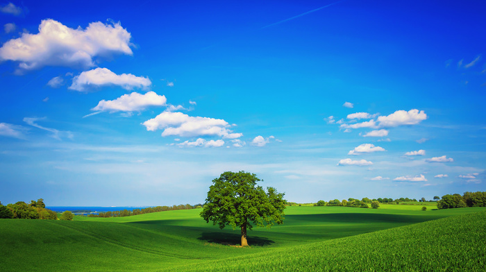 clouds, sky, tree, grass, spring, field, greenery, nature