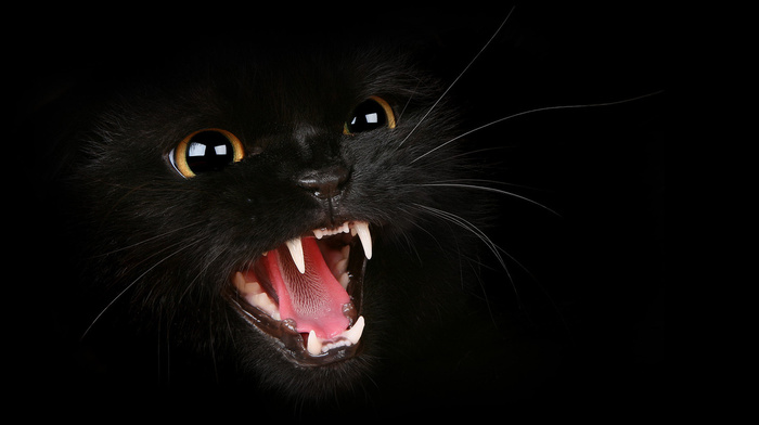 black, cat, background, predator, animals