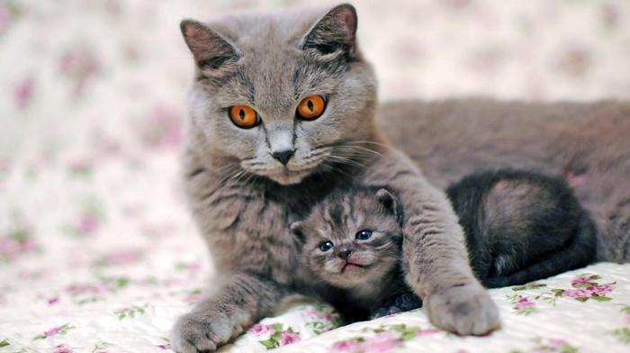 photo, animals, kitten, macro