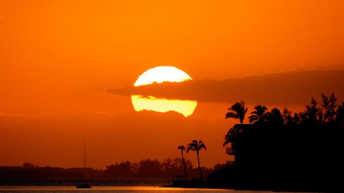 sunset, nature, beach, stunner, palm trees, sky, tropics, beautiful