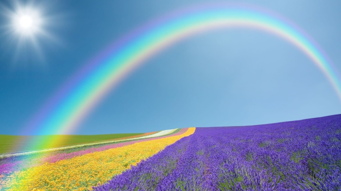 purple, yellow, flowers, rainbow, green, landscape, sky, field, nature, Sun