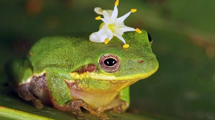 animals, flower, frog
