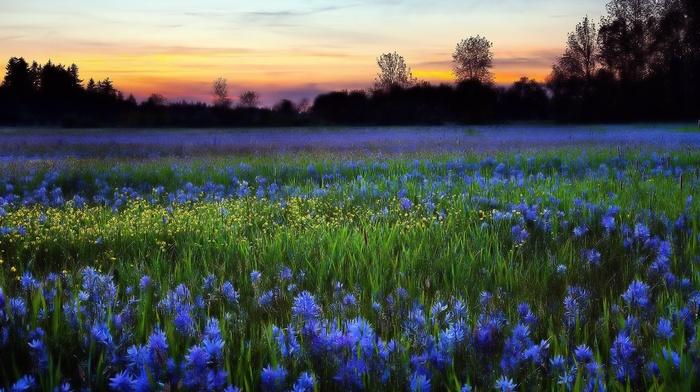 nature, flowers, beautiful, evening, sunset