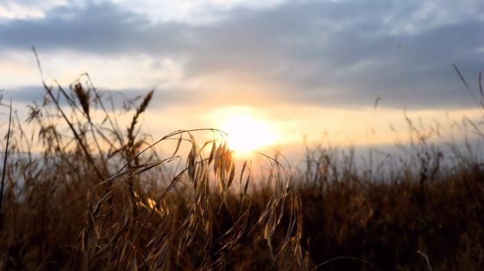 nature, sunset, evening, summer, grass, Sun