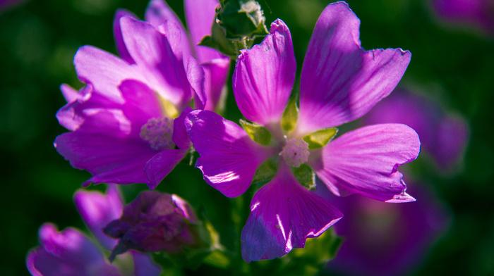 flowers, beauty, greenery, flower