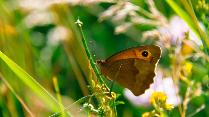butterfly, beautiful, grass, stunner, green