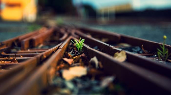 глубина резкости, листья, растения