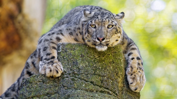 macro photo, animals, nature, stone, predator