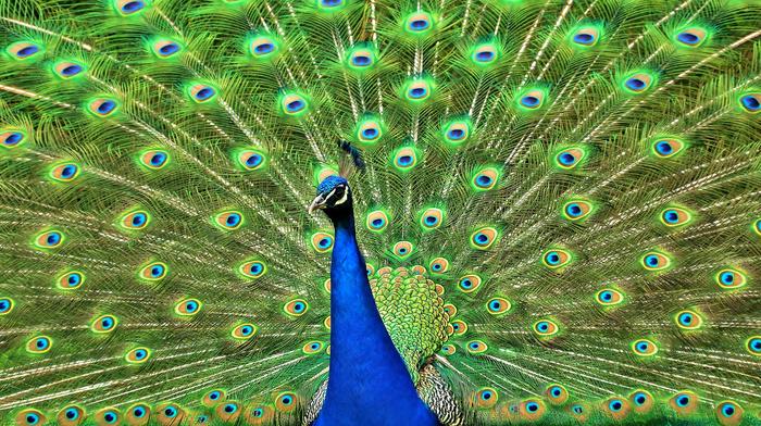 bird, animals, tail