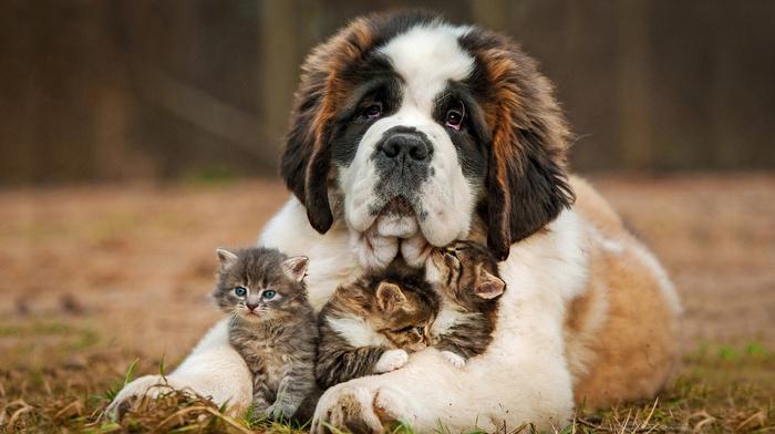 animals, positive, nature, dog, kittens