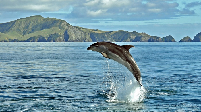 splash, fly, ocean, nature, sea, water, bay, game, mountain