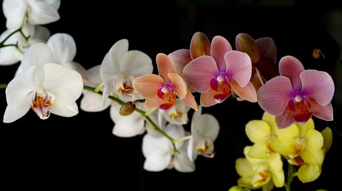 красивые, цветы, букет, нежные, орхидеи, цветок