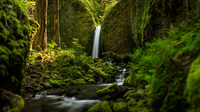 beauty, forest, greenery, creek, trees, moss, stunner