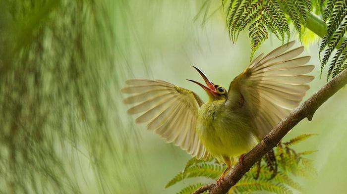 animals, wings, feathers, beauty, bird