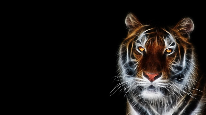 tiger, art, 3D, photoshop, predator, fantasy