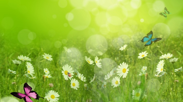photoshop, summer, flowers, art, beautiful, chamomile, nature