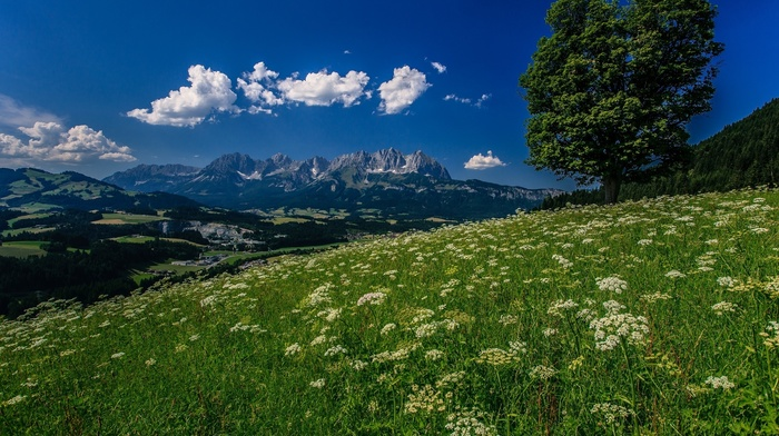 grassland, clouds, mountain, forest, nature, Alps