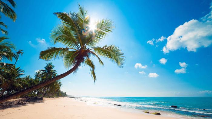 Sun, nature, sky, tropics, summer, palm trees, beach, ocean