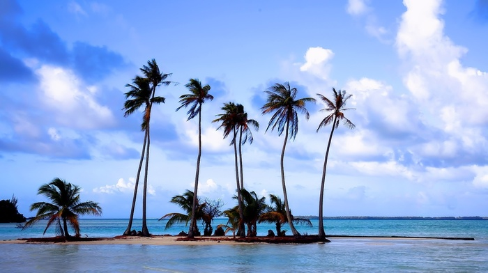 nature, rest, sea, palm trees, sand, beach