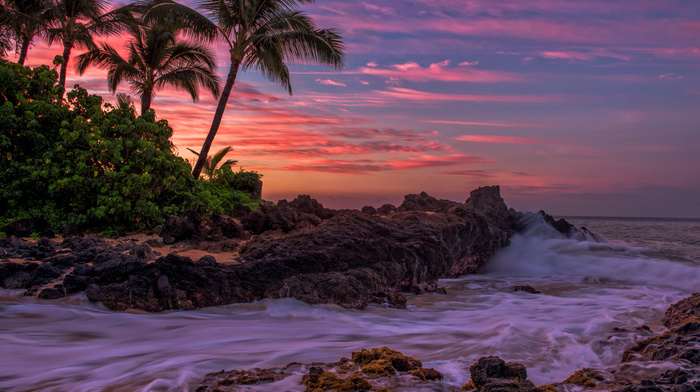 stunner, tropics, palm trees, storm, sea, evening