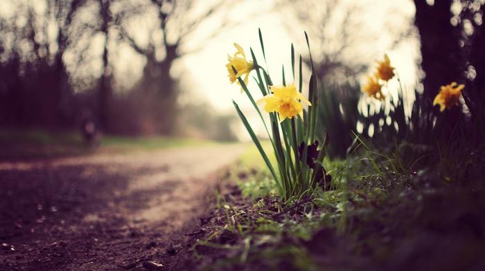 глубина резкости, желтые цветы, цветы