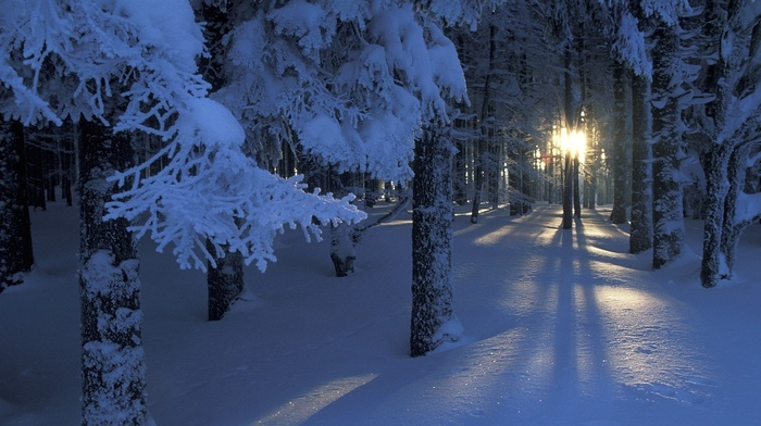 light, winter, snow, twigs, trees, forest, Sun