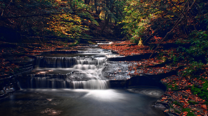 autumn, river, trees, forest, nature, leaves, creek