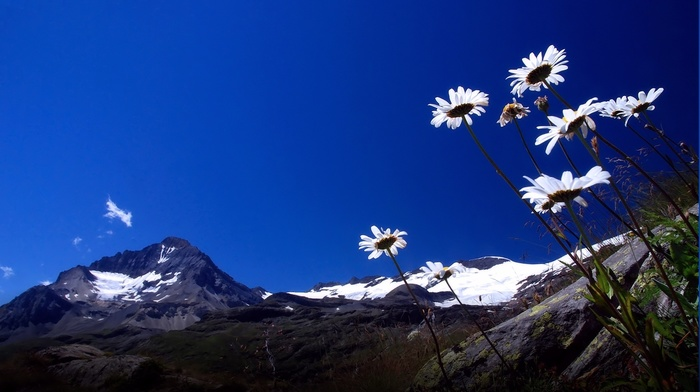 mountain, sky, chamomile, nature
