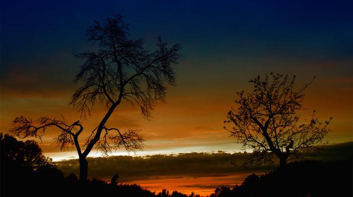 light, sunset, trees, evening, nature, beautiful, autumn, sky