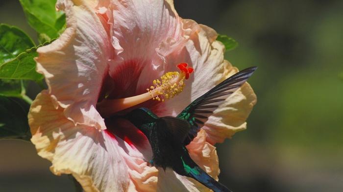 flowers, flower, nature, theme, macro photo, jungle, bird