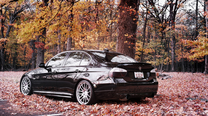 forest, autumn, bmw, wheels, cars, BMW, leaves