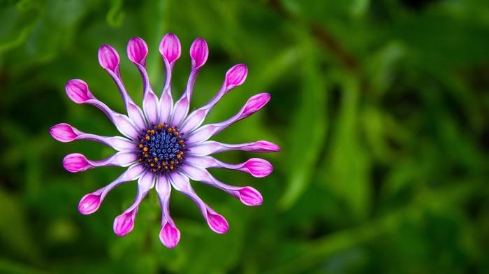 nature, flowers, photo, macro, flower, theme