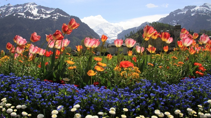 flowers, snow, paints, nature, mountain