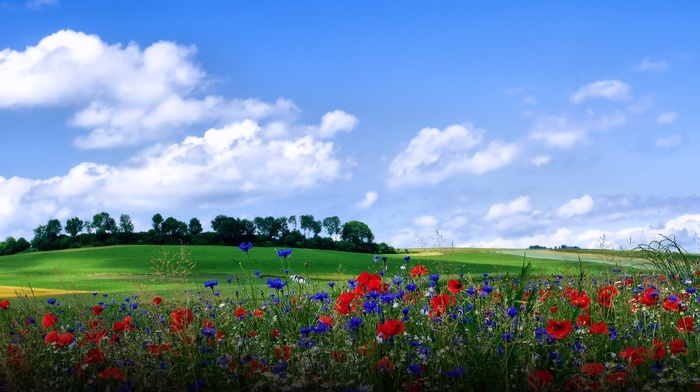 paints, flowers, nature, summer