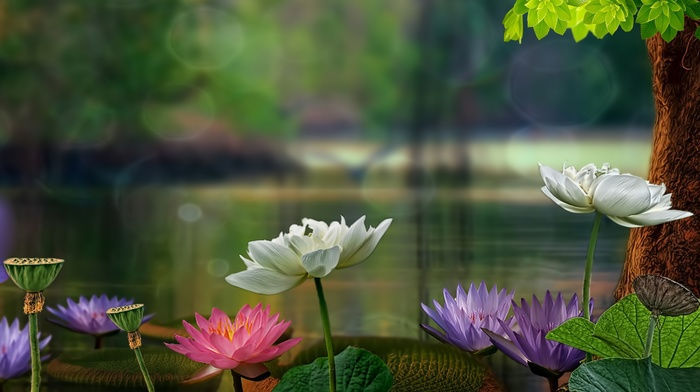 summer, beautiful, 3D, photoshop, nature, macro, flowers, pond